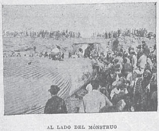 Ballena1895_NuevoMundo